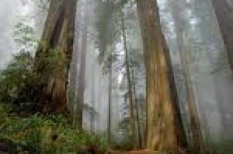 Abren maestria en conservación de recursos forestales en Oaxaca