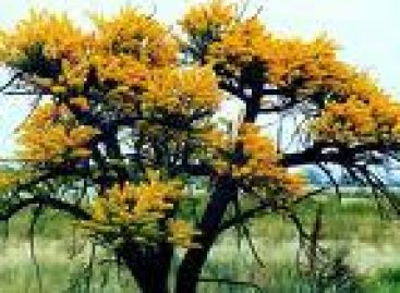 Bosques de la Mixteca en riesgo de perderse