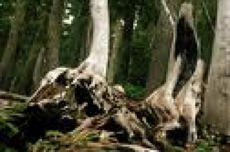 Afectan plagas comunidades oaxaqueñas que cuentan con recursos forestales
