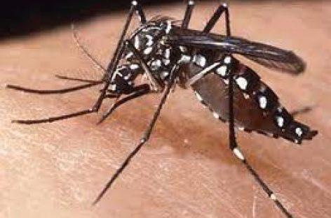 Detectan nuevo dengue en Oaxaca que es más letal que el hemorrágico: SSO