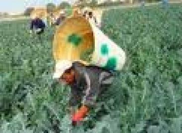 Sin empleo migrantes mixtecos que regresan de Estados Unidos