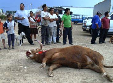 Recuperan libertad defensores de animales presos, durante protesta