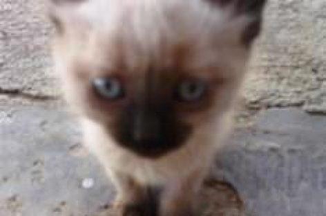 Siete gatitos en busca de hogar