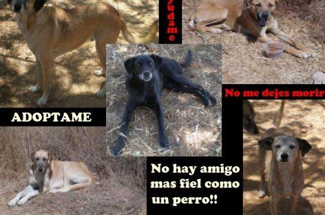 Urge ayuda para cinco perros en condición de calle