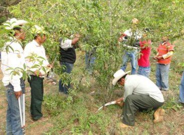 Ejercerán 10 mdp para el desarrollo de la fruticultura en Oaxaca