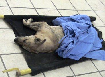 Por maltrato animal denuncian a Beatriz Cárdenas, directora de Medicina de la UABJO