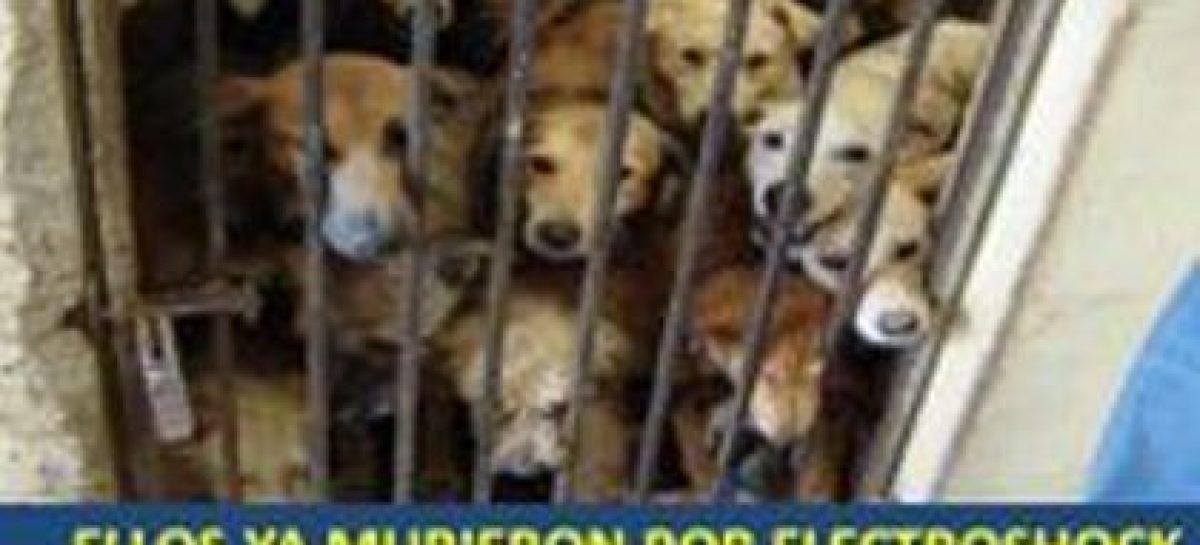 Brigitte Bardot pide no electrocutar animales en antirrábicos mexicanos