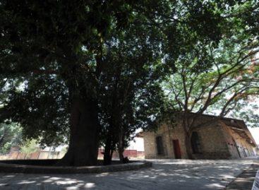 Iniciarán poda y tratamiento fitosanitario de árboles de parques y jardines