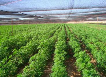 Personal militar asegura más de tonelada y media de mariguana en Baja California