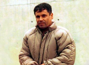 """<strong>De """"El Chapo"""" Guzmán, el mayor plantío de marihuana localizado en Baja California</strong>"""