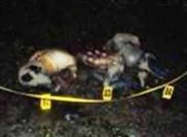 Identificados los cadáveres de los cuatro ejecutados en rancho del Istmo de Tehuantepec, eran originarios de Veracruz