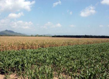 Exporta Oaxaca tecnologías de producción a Chiapas para alcanzar autosuficiencia de maíz
