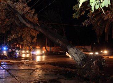 Lluvia deja como saldo la caída de 23 árboles: Protección Civil Municipal
