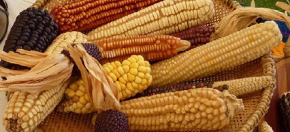 Decimonovena muestra gastronómica del elote y maíz