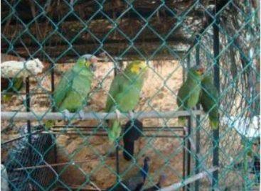 Aseguran animales en peligro de extinción y mil 825 litros de combustible en Minatitlán, Veracruz
