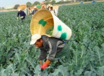 Orienta Sedesol a jornaleros agrícolas sobre derechos sociales