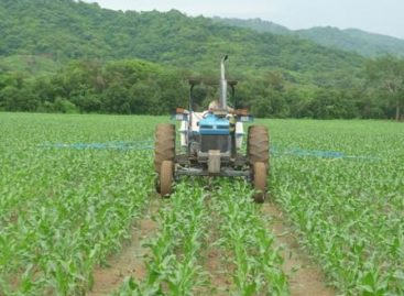 Protegen razas de maíz del altiplano mexicano en el DF; mantiene monitoreo constante