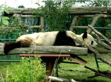 """¡Conoce desde hoy """"Chapultepec: un zoológico desde adentro""""!; realizan serie de 20 cápsulas"""