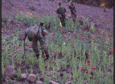 Localizó y destruyó personal militar plantíos de amapola en Taxco de Alarcón, Guerrero