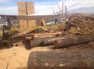 Clausuran cuatro aserraderos y aseguran maquinaria y 155 metros cúbicos de madera en el DF