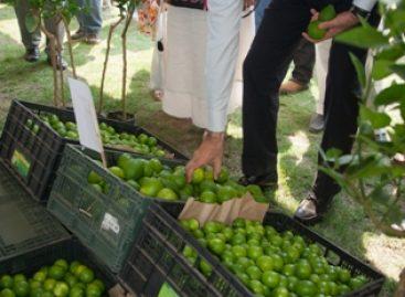Garantizan seguridad alimentaria; invertirán en el campo oaxaqueño 768 mdp durante 2013