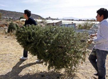 Continúa campaña de recolección de árboles navideños en el DF; concluirá el 20 de enero