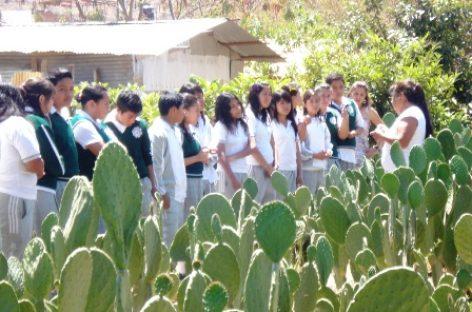 Cumple 23 años Museo Ecológico Nocheztlicalli en Oaxaca; preserva la grana cochinilla