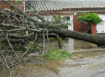 Reportan caída de 125 árboles por fuertes rachas de viento en la Ciudad de México