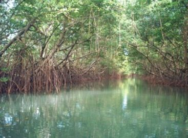 Exigen senadores a Semarnat que proyecto Dragón Mart no se establezca en zona manglar