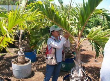 Pérdidas económicas y ambientales por plaga de ácaro rojo de las palmas, alerta PVEM