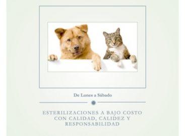 Irrisoria la cifra de esterilizaciones de perros y gatos realizada por el municipio de Oaxaca de Juárez: APAOAX