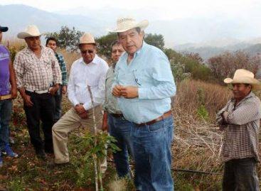 Entregan insumos para elevar la producción de aguacate, en la Sierra Sur de Oaxaca