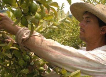 Laboran jornaleros agrícolas en situación de vulnerabilidad; busca Congreso proteger sus derechos