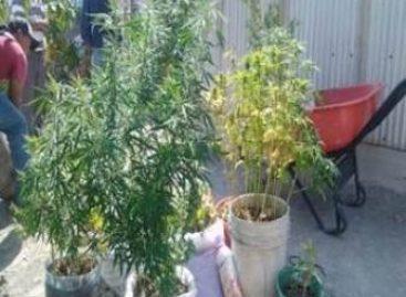 Localizan autopartes y plantas de marihuana en predio de Oaxaca; Dos detenidos