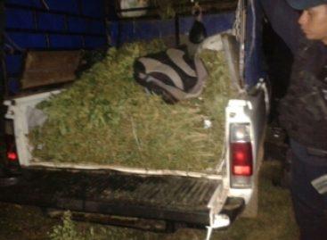Decomisan policías estatales 150 kilogramos de marihuana en la Sierra Sur de Oaxaca