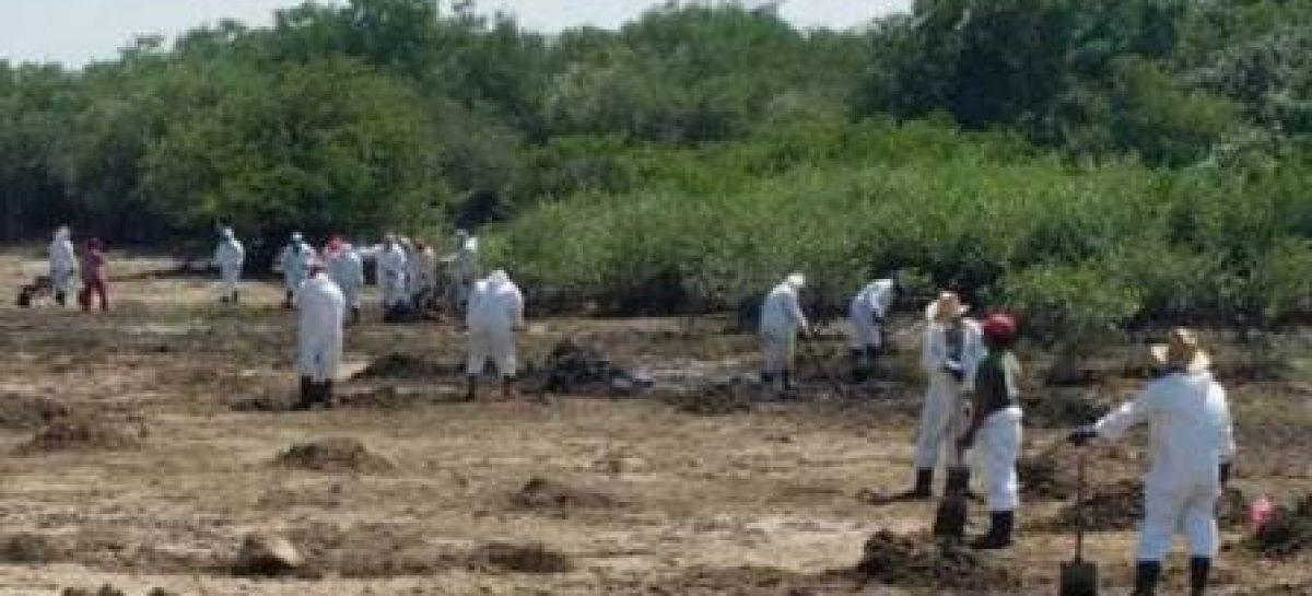 Avanzan trabajos de limpieza y saneamiento en la laguna de Bahía La Ventosa, Oaxaca