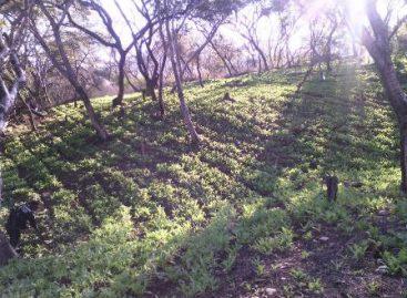 En Guerrero, Policía Federal erradica sembradío de amapola y destruye casi media tonelada de mariguana
