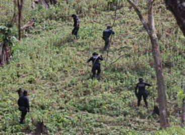 En Guerrero, destruye Policía Federal sembradío de amapola de 2,600 metros cuadrados de extensión