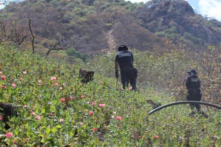 Las acciones en Sonora y Guerrero