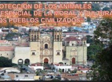 Demandan esterilización gratuita y de calidad a animales de compañía en Oaxaca