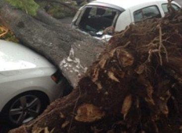 Atiende Consejo Municipal de Protección Civil a población afectada por la lluvia en Oaxaca
