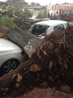 Provoca caida de árboles e inundaciones