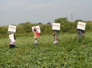 Garantizar en manuales condiciones laborales de jornaleros agrícolas, piden senadores a Sagarpa