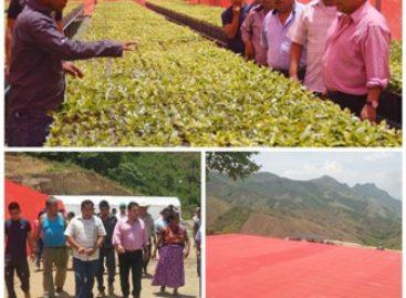 Producirán viveros tecnificados de Oaxaca tres millones de plantas de café