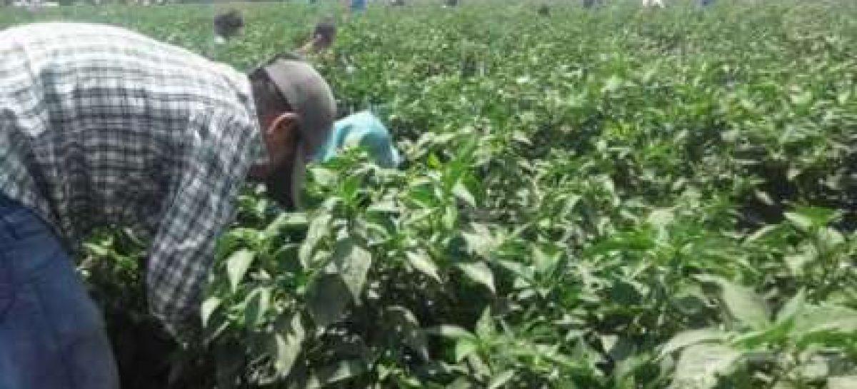 Dicta CNDH medidas cautelares en favor de menores rescatados de campos agrícolas
