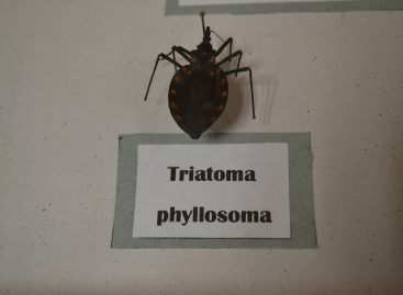 Enfermedad de Chagas trasmitida por chinche ataca el corazón