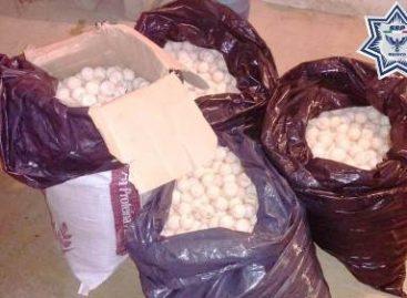Detenida por la Policía de Oaxaca cuando transportaba más de dos mil huevos de tortuga