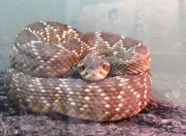 Asegura PROFEPA 29 reptiles y anfibios que iban a ser vendidos ilegalmente en domicilio particular