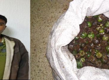 Lo capturan con goma de opio en la Sierra Sur de Oaxaca