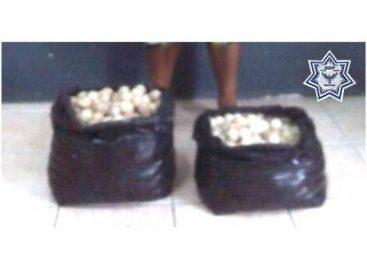 Detiene Policía de Oaxaca a sujeto que transportaba 976 huevos de tortuga